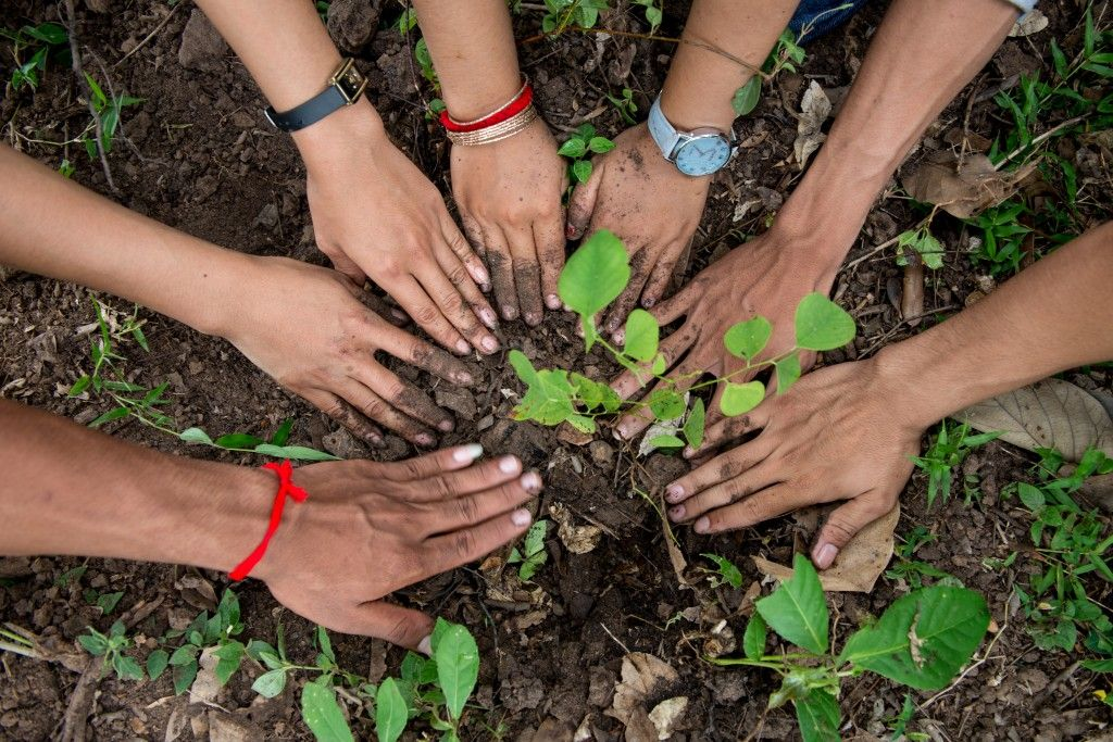 Tree-Planting-Cambodia-2014-Luc-Forsyth-50-1024x683.jpg